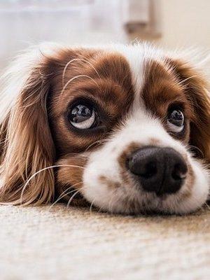 vakantiehuis omheinde tuin hond