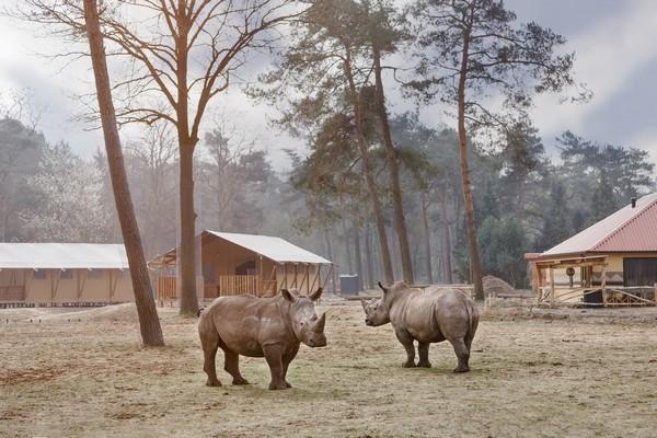 origineel overnachten boomhut safari