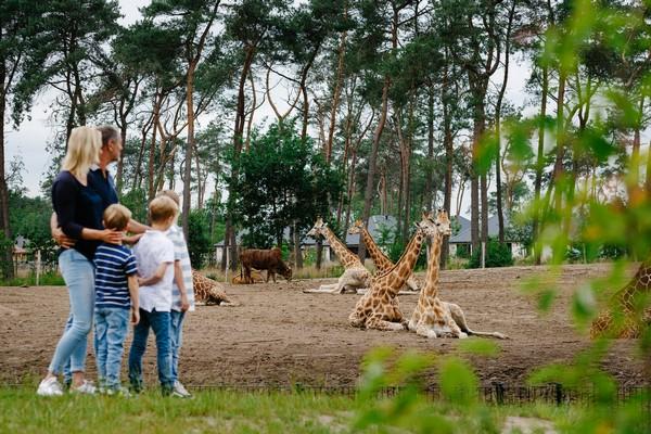 origineel overnachten boomhut safari (5)