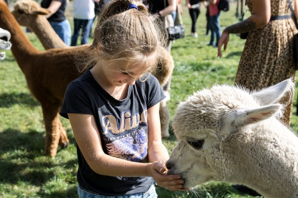 alpaca boerderij glamping origineel overnachten (9)