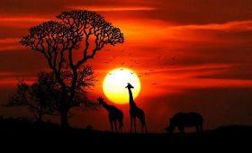 glamping safaritent nederland