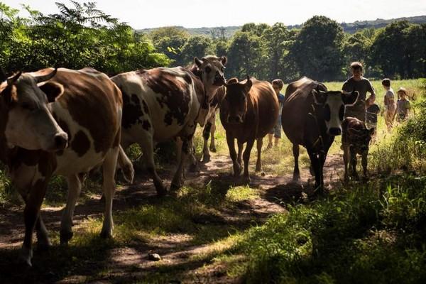 origineel overnachten frankrijk bretagne boerderij gezin vakantie