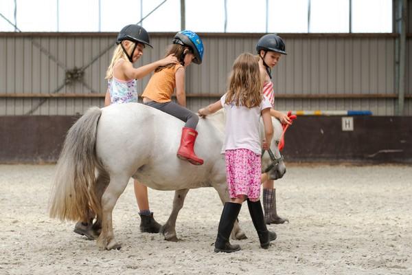 origineel overnachten nederland paarden boerderij gezin vakantie