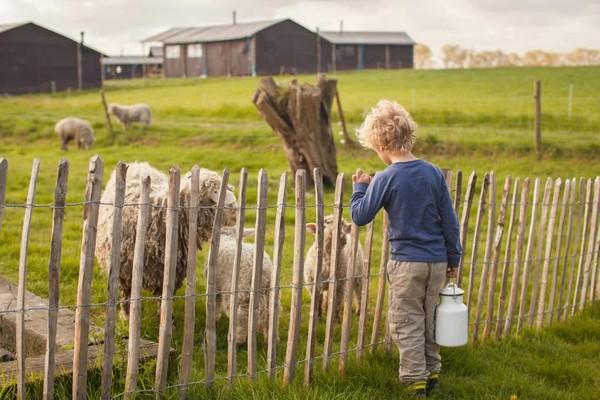 uniek overnachten belgie boerderij gezinsvakantie