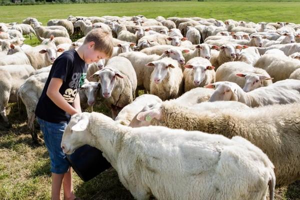 uniek overnachten nederland waddeneilanden boerderij gezinsvakantie