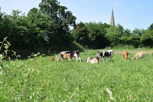 uniek overnachten frankrijk normandie boerderij gezinsvakantie